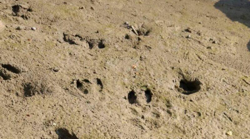 Orme e impronte
